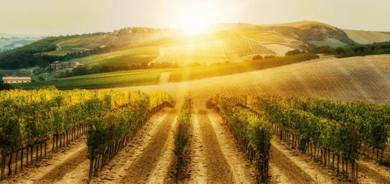 BLOG-4_Post-photo_03-min Najpoznatije vinske regije sveta