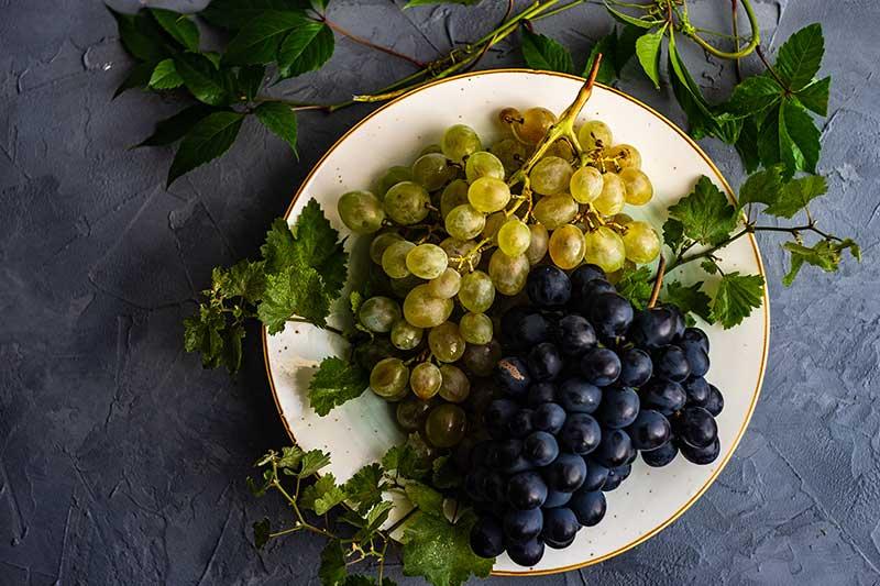 Five-Senses-blog-Koja-ste-sorta-grozdja-1 Koja ste sorta grožđa?